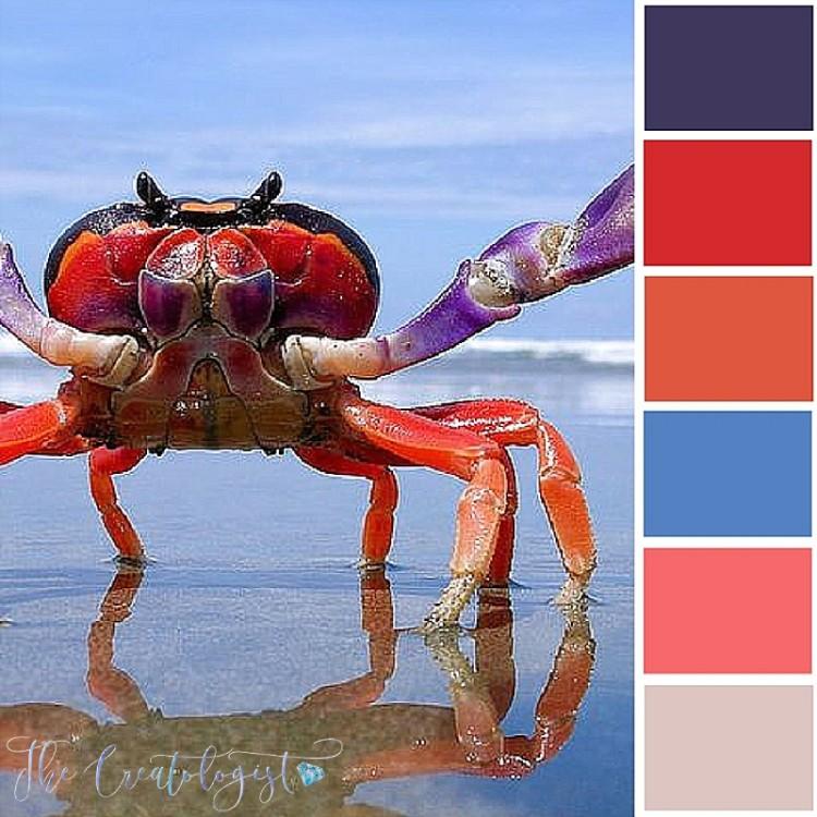 Color Inspiration | Halloween Crab